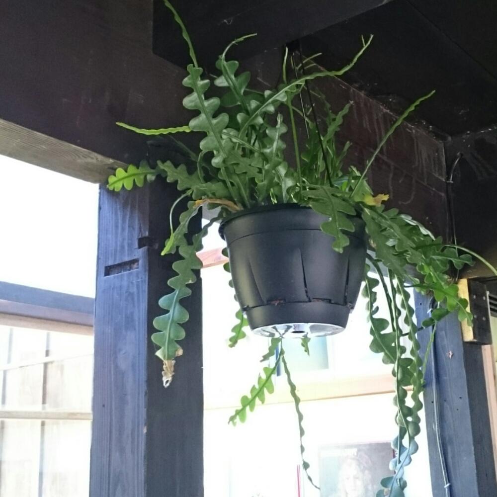男木島図書館に飾られている多肉植物